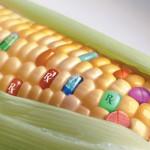遺伝子組み換え食品は日本に大量に輸入され、知らぬ間に食卓に上がっているという事実。