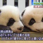 【親近感】マカオの双子のパンダ、名前は「健健(ジェンジェン)」と「康康(カンカン)」