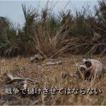 【日本人必見】自衛隊が行く南スーダンとは?ジョージ・クルーニーがナレーション「戦争で儲けさせてはならない!」(日本語字幕・動画4分30秒)