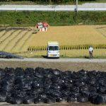 【スゴイ写真】汚染土のすぐ隣の田んぼで稲刈りby毎日新聞