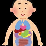 【驚愕】人体から新たな「臓器」が見つかる