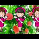 【福島産の桃試食販売】中年の女性「おいしいねえ。これはどこ産?」⇒ミスピーチ「福島です」と笑顔で答える⇒中年の女性・桃を吐き出し立ち去る